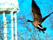 taking flight at Boys Town