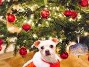 Benji's First Christmas