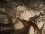 Bella loves the snow.