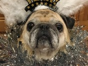 Puddin' the Pug wishes you a Happy New Year!