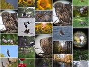 My 2016 Wildlife Photos: Why I Love Maryland