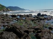 Siuslaw National Forest - Cape Perpetua Scenic Area