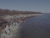 Polar Plunge 2017 at Bradford Beach