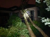 Tree fell on our house