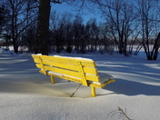 The Yellow Bench
