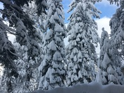 Another beautiful shot from Truckee