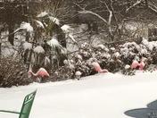 OKC Flamingos and Palm Tree