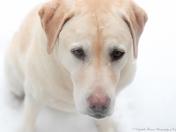 Cape Cod Dog Loving the Snow