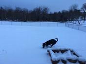 Snow, SE 74th and Hiwassee