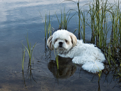 At the Fish Pond