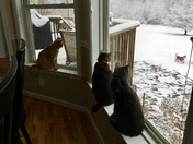 Snowy Day ❄️❄️❄️
