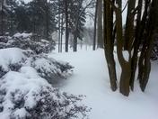 Lexington snow!