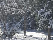 Winter in travelers rest