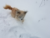 Chewy 1st snow