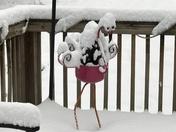 Snow Day in Pumpkintown