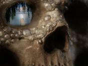 Seeing skull