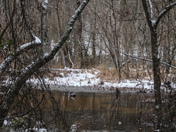 Snow at Lake Conestee Nature Park