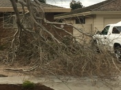 Tree limb just misses house and truck