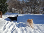 Midnight and Taz's Snow Day 1-7-17