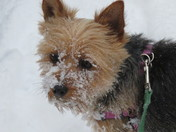 Josey's first snow....