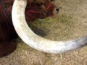Horn of Plenty...