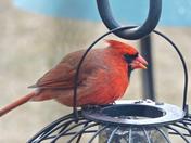Cardinal-14 Jan 2017