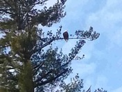 Eagle siting in Rochestet