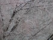 ice storm Jan 2017 Drexel MO