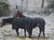 Horses in the ice