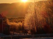 Sunrise through the frosted trees