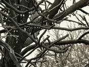 Huxley, Iowa - Ice Storm Jupiter