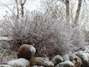 Ice Storm January 2017