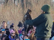 Rehabilitted Eagles Released