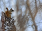 Squirrel enjoys snow scene