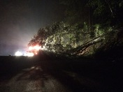 Hwy 17 south blocked by tree