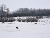 Neepawa fields in winter