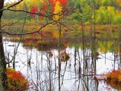 Love swamps