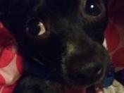 My Baloo