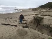 Beach erosion at Sunset State Beach