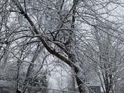 Wintery tree
