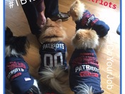 Patriots Canine Squad