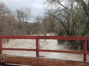 Raging Napa River floods vineyards, closes roads.