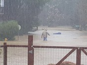 San lorenzo river at covered bridge man walking through flood waters