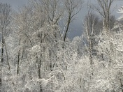 Snow covered trees and a low flying plane