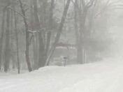 Feb 9 2017 snow