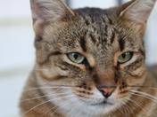Neighbor's Cat Tony