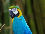 Macaw at Audubon Zoo