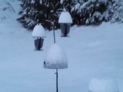 Snow Bird feeders