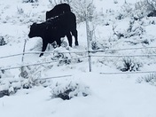 Seeing in beautiful black and white this morning in Cubero