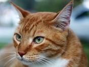 Sammy The Cat